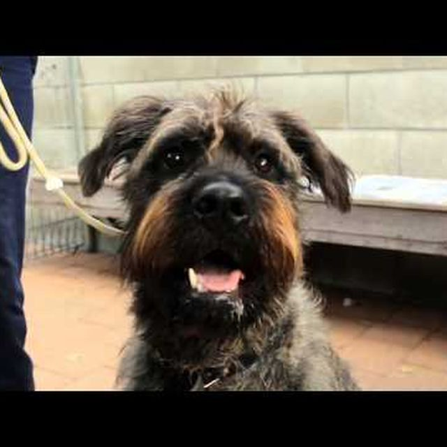video: SPCA: DRIVING DOGS by tomi-col