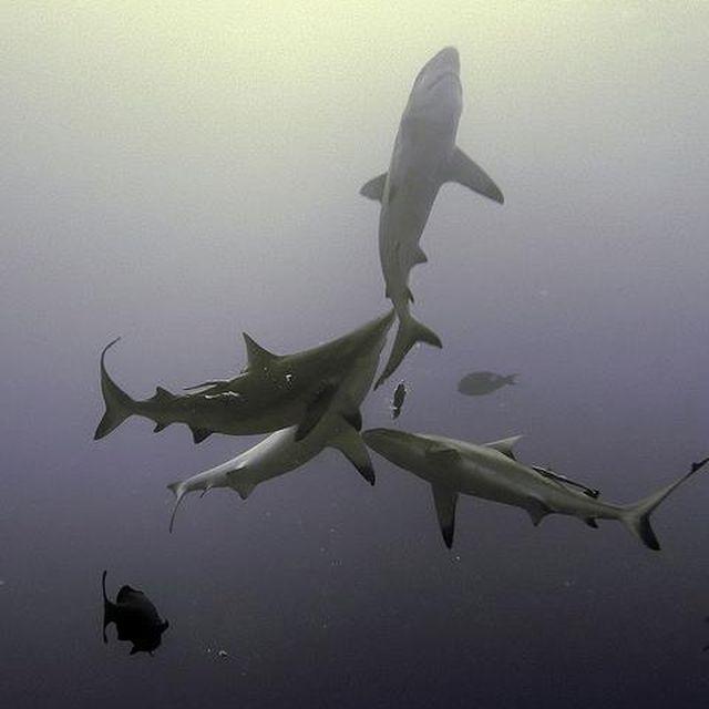 image: SHARK by fidalgo
