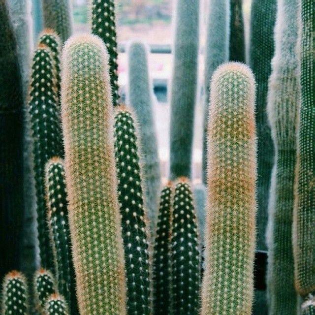 image: Levantarse recordardando un sueo  #fiercenature #cacti by silvia_perez