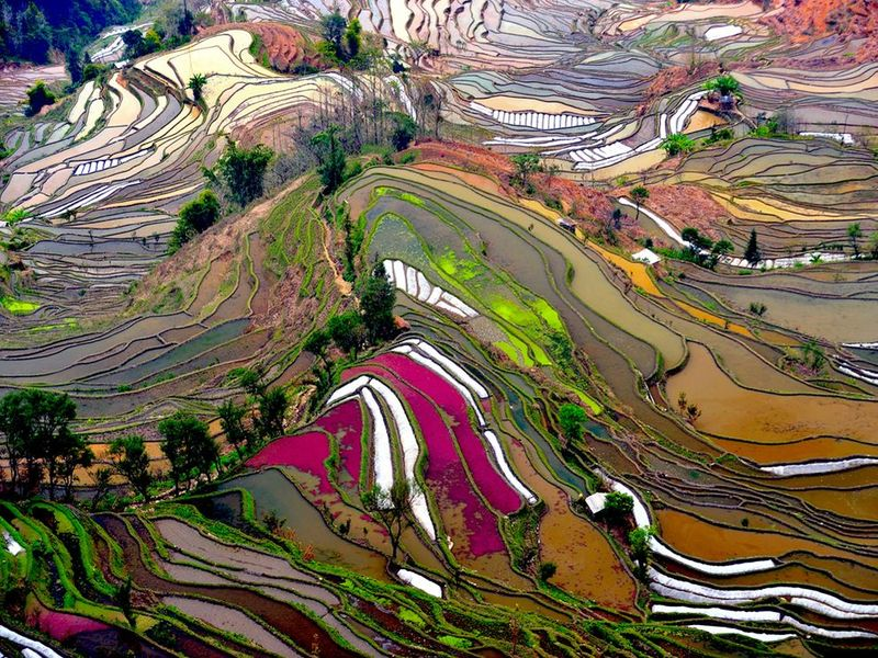 image: Yuanyang Terraced Rice Fields in china by andy-rice