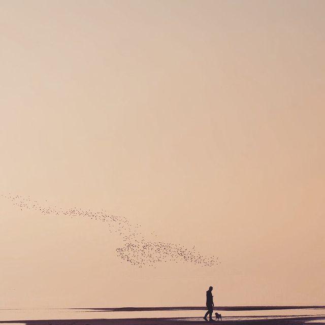 image: Birds by mercemillan