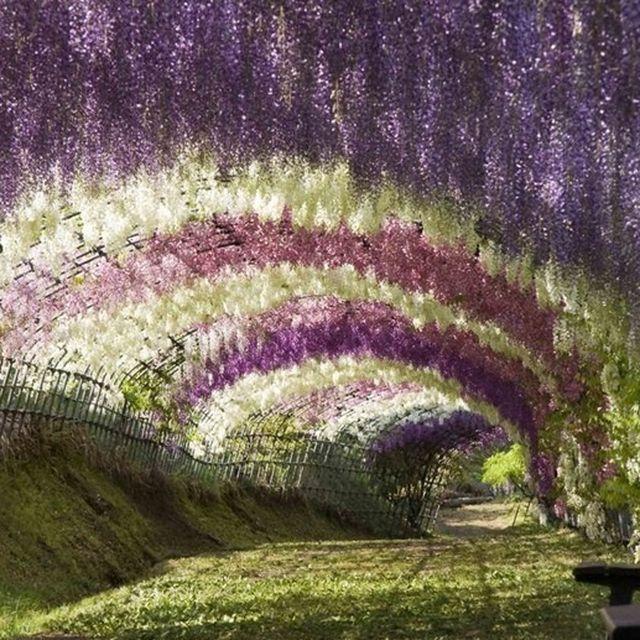 image: Ashikaga flower park by pit