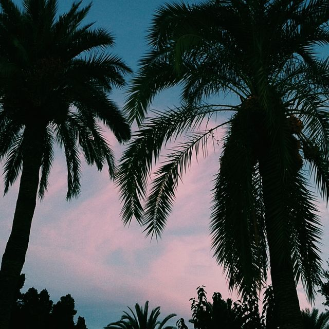 image: Palmtrees by superextrahot