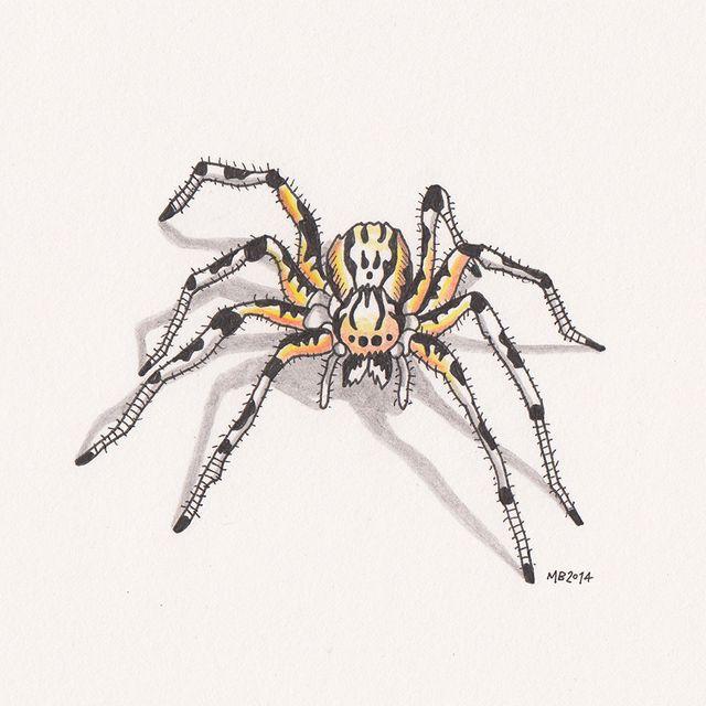 image: Spider by marta_brandariz