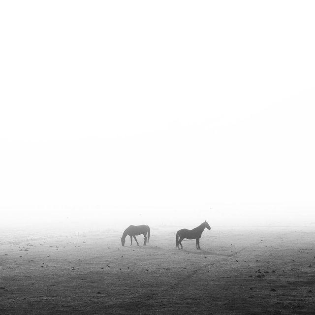 image: This morning ~ by plndm