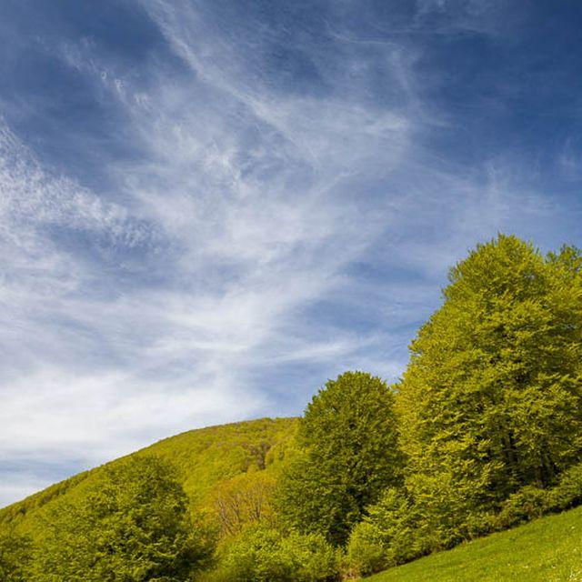 post: El frondoso bosque de los embalses de Leurtza, Navarra by machbel