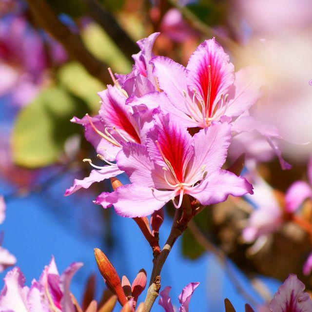 image: Pink Spring! by catiasilva