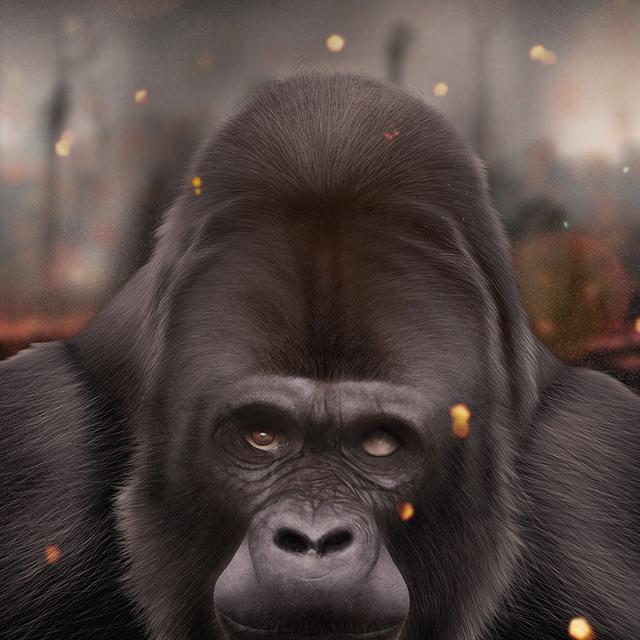 image: Gorila by jaime-sanjuan