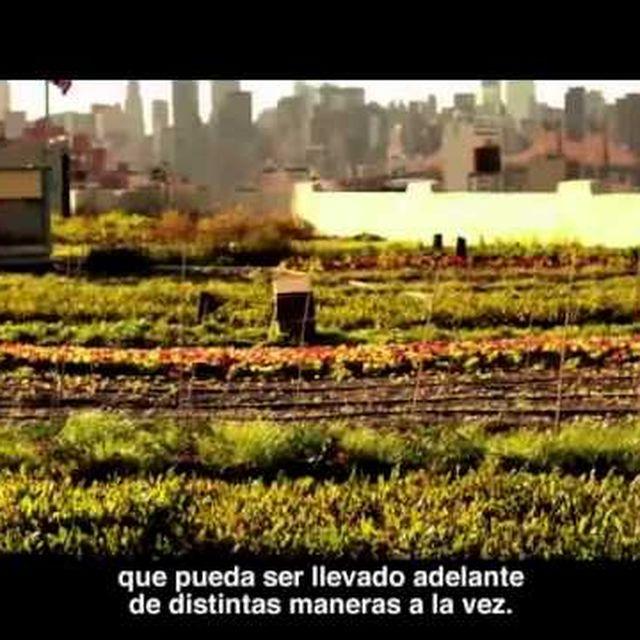 video: ¿Realmente estás haciendo lo que te hace feliz? by elpadre