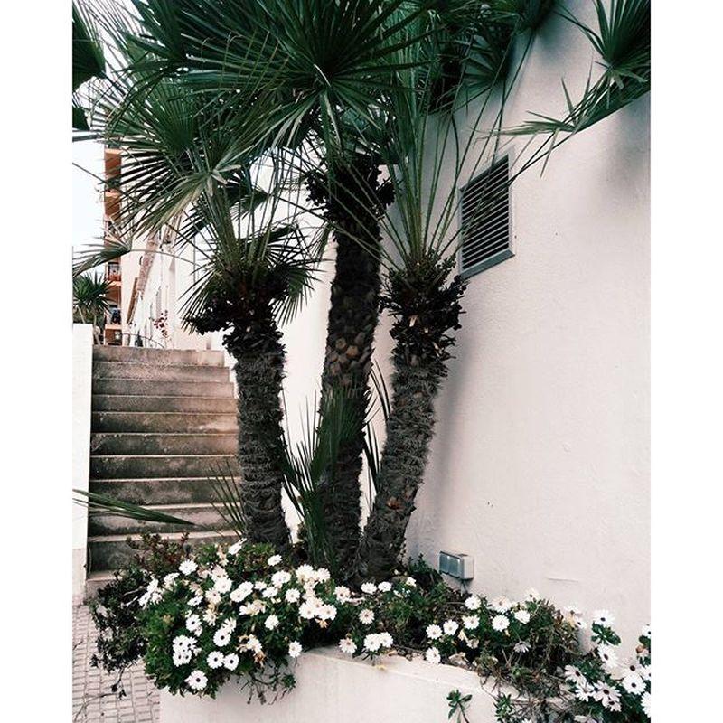 image: cuando la postal llegue a su destino #palmtrees #flower by superextrahot