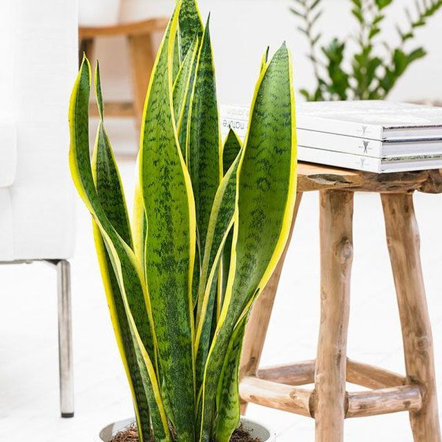 image: Casas Sostenibles: 10 plantas que purifican el aire en casa — Vegan Expedition by veganexpedition