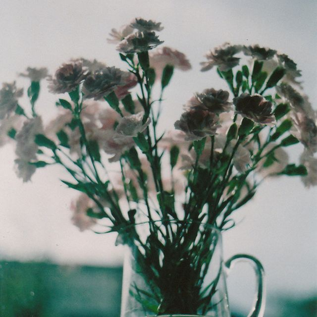image: Flwrs by annahope-annalogica99