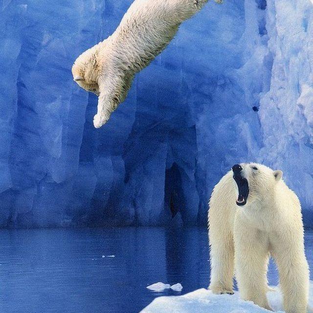 image: Jump by gabriel-lisboa-9