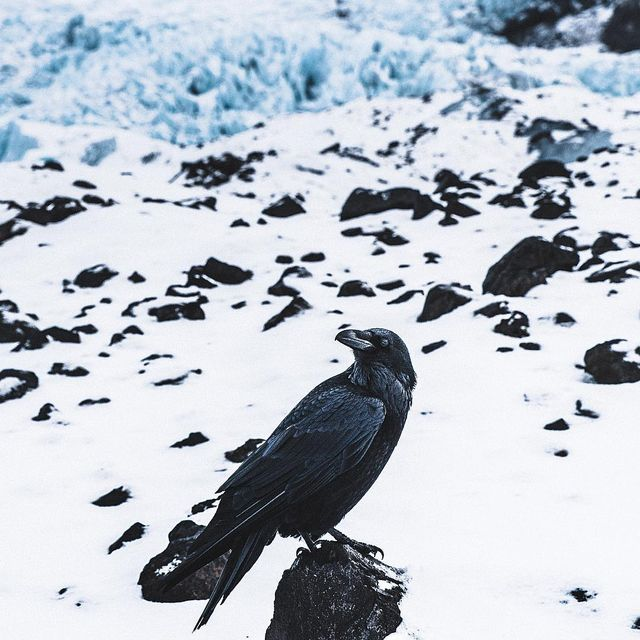 image: Silence on the glacier.Stark is the ravens call. by donalboyd