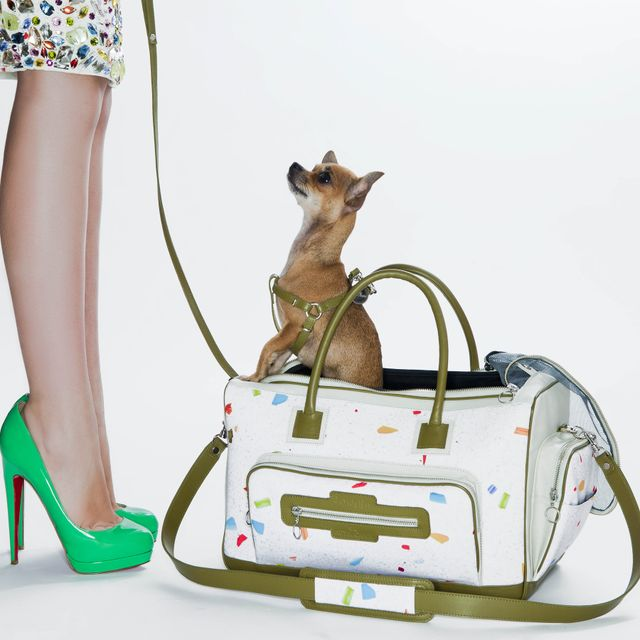 image: DAVIDELFIN FOR ROYAL CANIN by helen_arbus