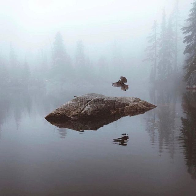 image: Morning stillness in the North Shore mountains. Can you see the second bird? by itsbigben
