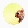 julientabet's avatar