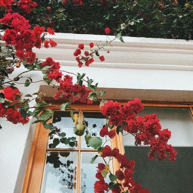 image: Ventanas y flores. ? by yuyacst