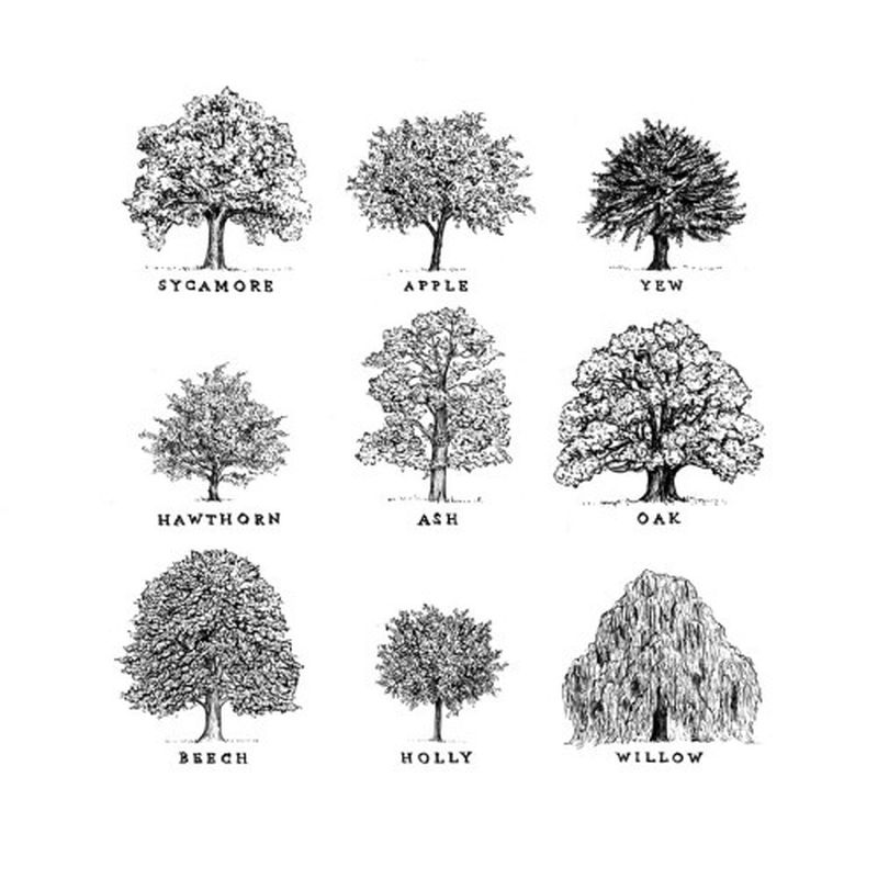 image: trees by eastofeden