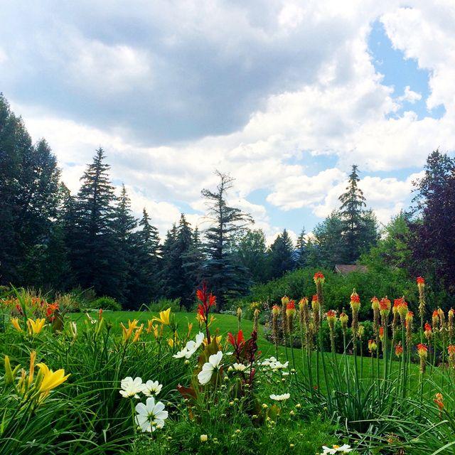 image: summer flowers by elizabethjlocke