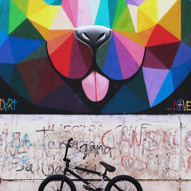 image: Back with the black ??? @flybikesbmx @animalbikes ?? #bmx #bikes #savanna by courageadams