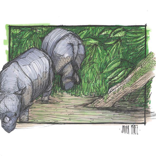 image: Java Rhinoceros by eqixclothing