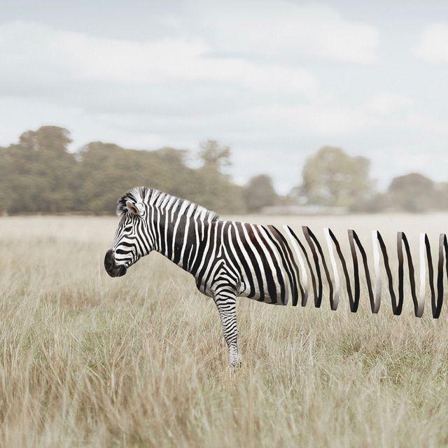 image: 🦓 Slinky fella by @en.ps by ratedmodernart
