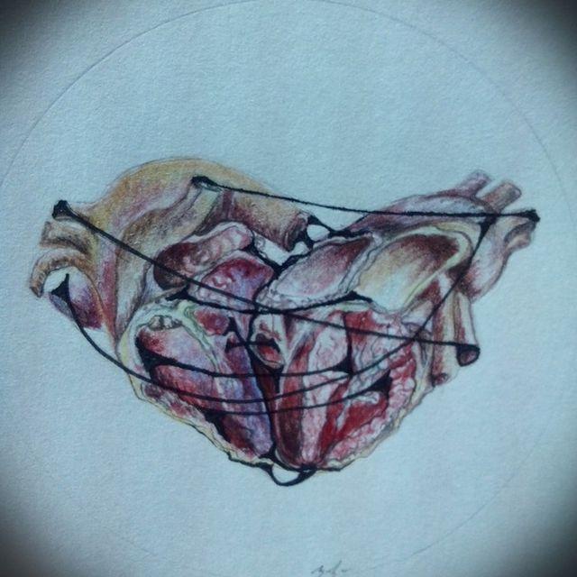 image: mini siamese heart by anaminum