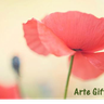 artegiftscr-artegiftscr's avatar