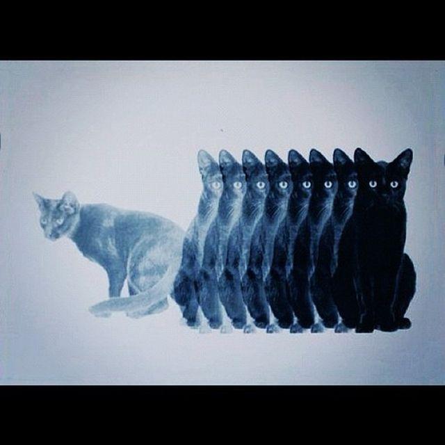 image: BLACK CAT by martinrush