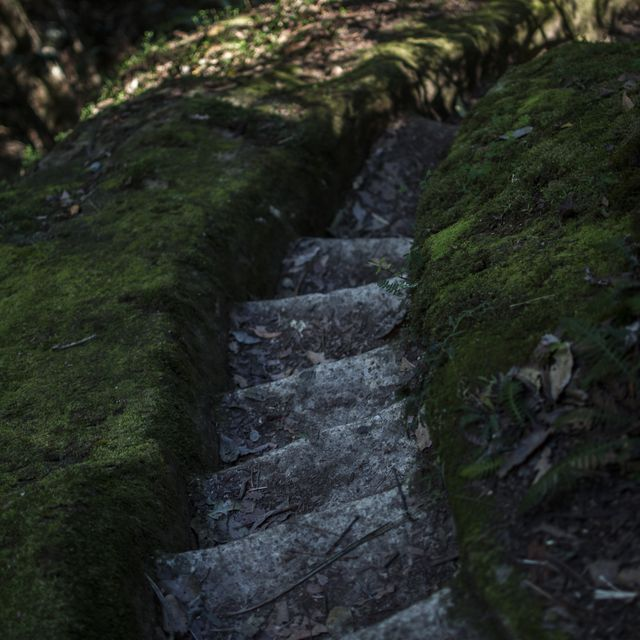 image: Steps by myles