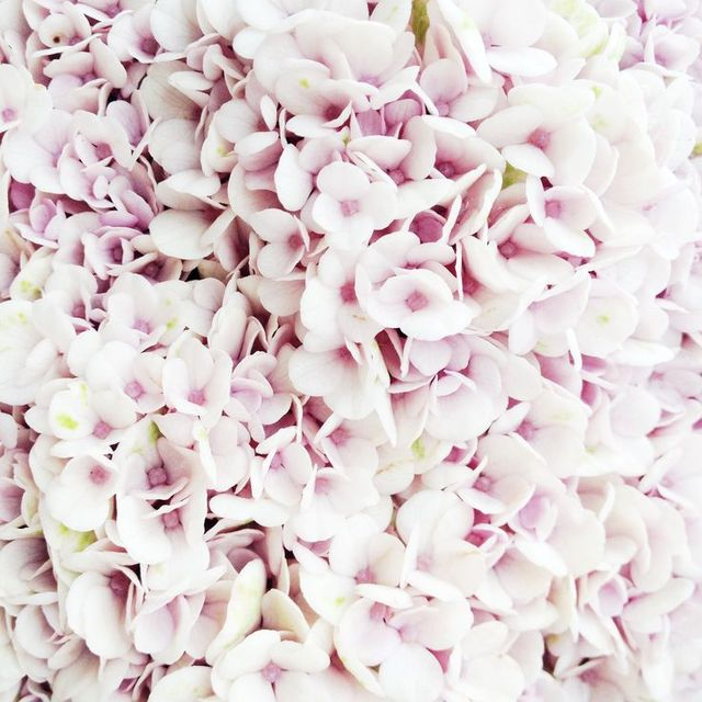 image: in bloom by eastofeden