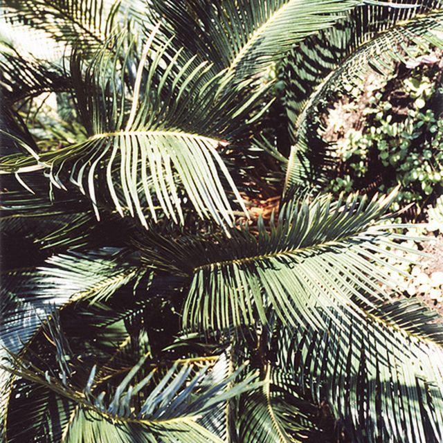 image: Crude tropico by merilin-kook