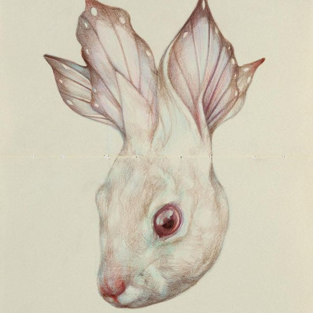 image: The Bunnyflyer by marcomazzoni