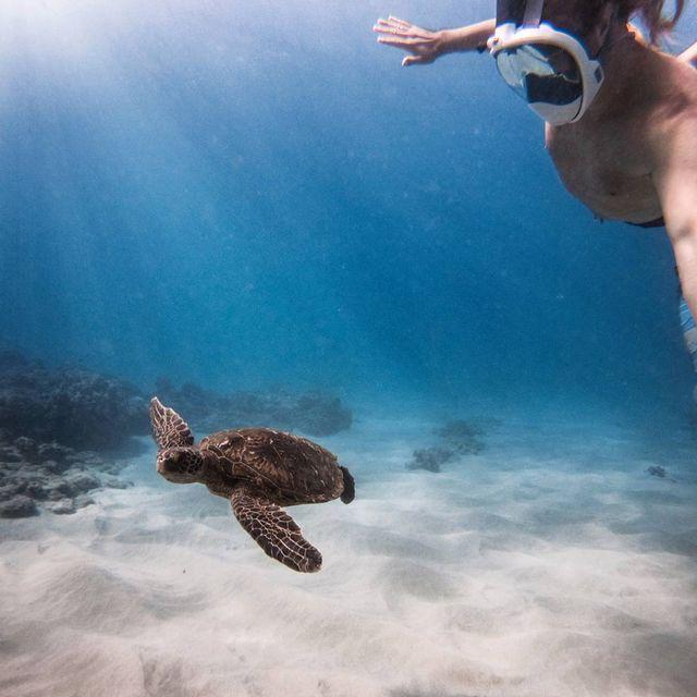 image: Standard hawaii turtle selfie 🐢💁 by chrisrogersza