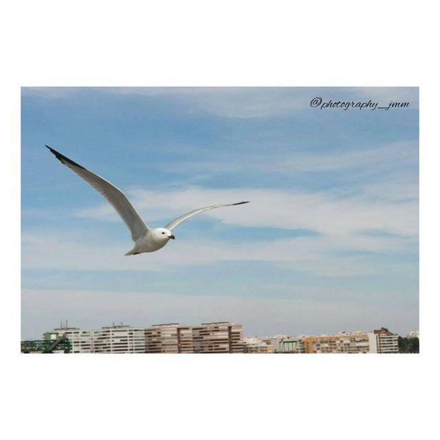 image: Gaviota- Seagull by photography_jmm