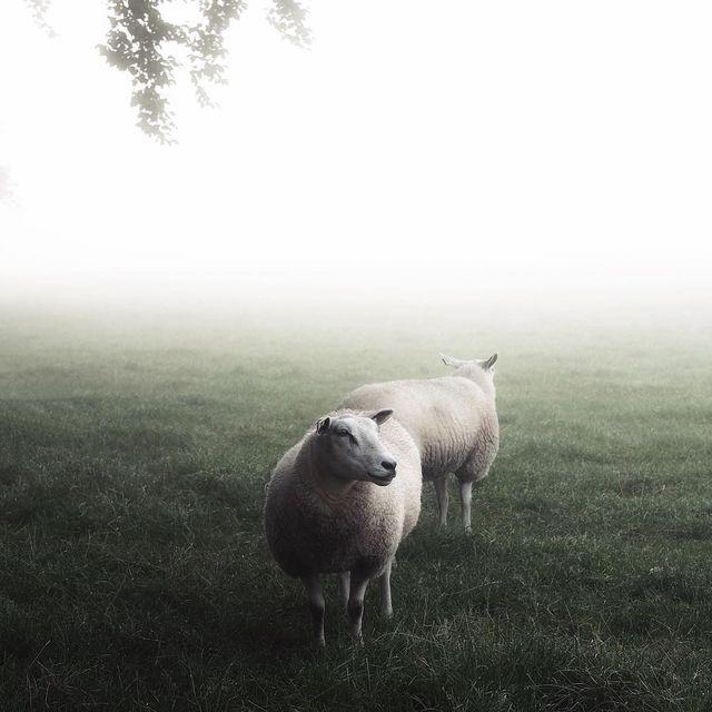 image: Sheepishly ~ by plndm