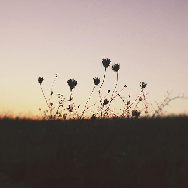 image: Encontrando la belleza simplificada. #jj_V8relaxed by pilar_garcia