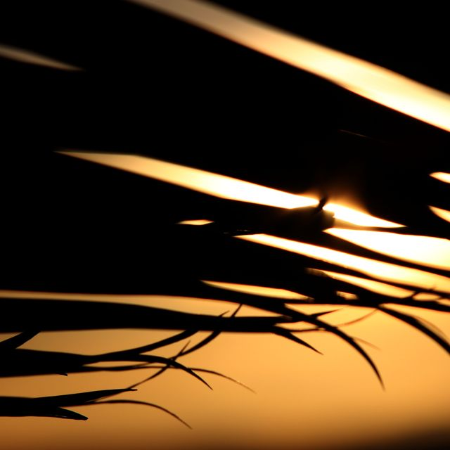 image: Palm by anaelisa