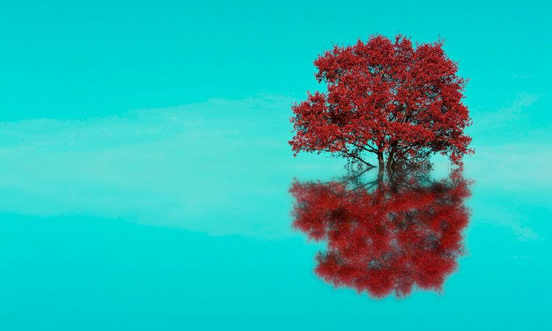 image: TREE REFLECTION by polpv