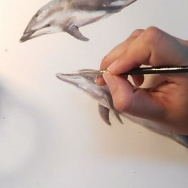 image: Delfín moteado ?(wip parte 2) mi segunda participación para #inktober2017 ??hecho con tinta parker y guasch ?? #inktober #dolphin #love #sealife #wild #freethedolphins #dive #sea #ink #parker #painting #animal #illustration #watercolor #delfin #ilustracio by elisaancori