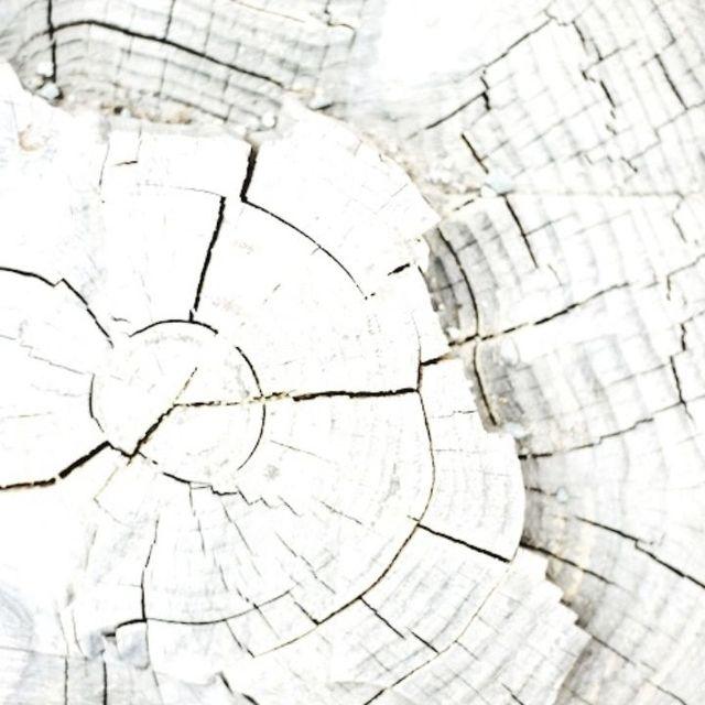 image: WHITEWASHED TREETRUNK by anurbanvillage