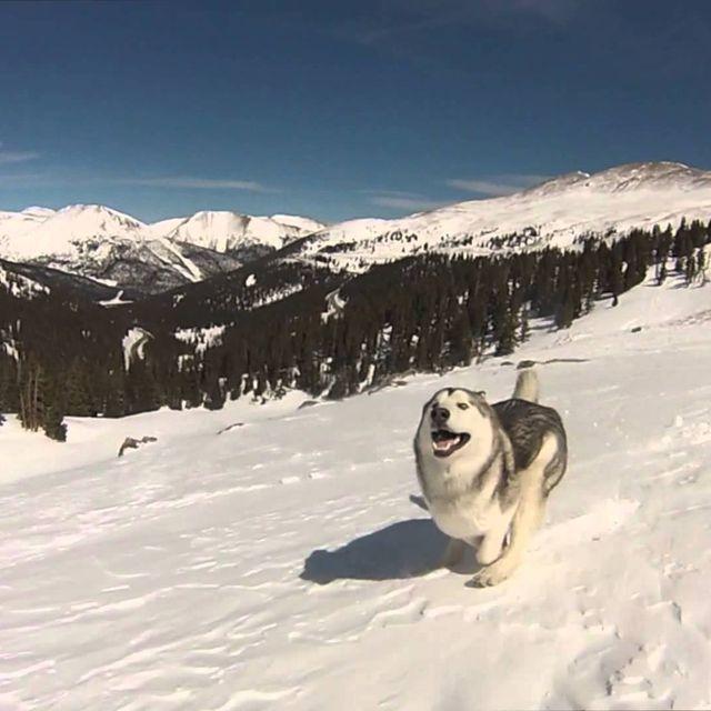 video: Wolfdog Epic Adventures by wavesoftimeandspace