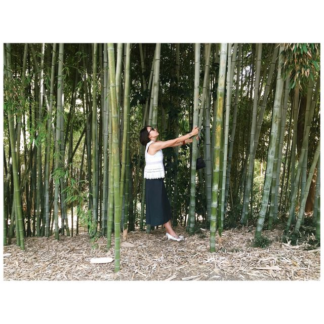 image: Bamboo forest by drumandlace
