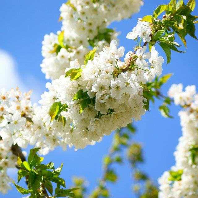 image: I love spring! by catiasilva