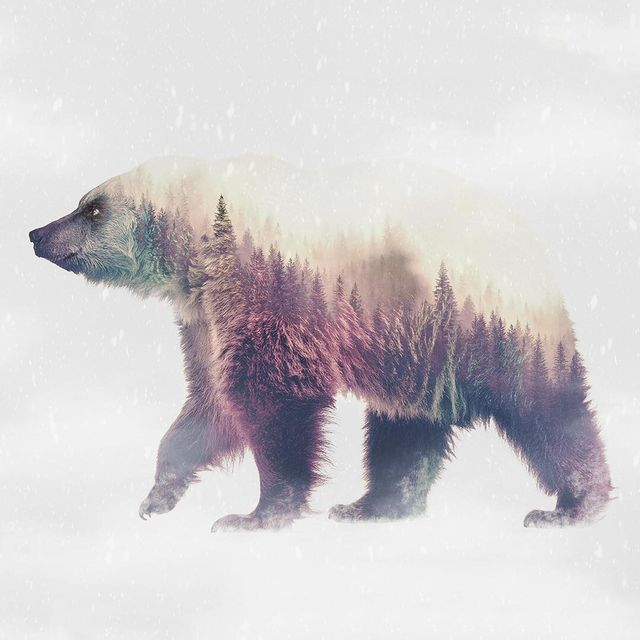 image: ✖️Beary Color Forest✖️🌲🐻 by ciscographie