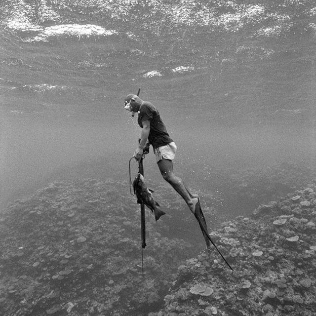 image: underwater fishing by patrick