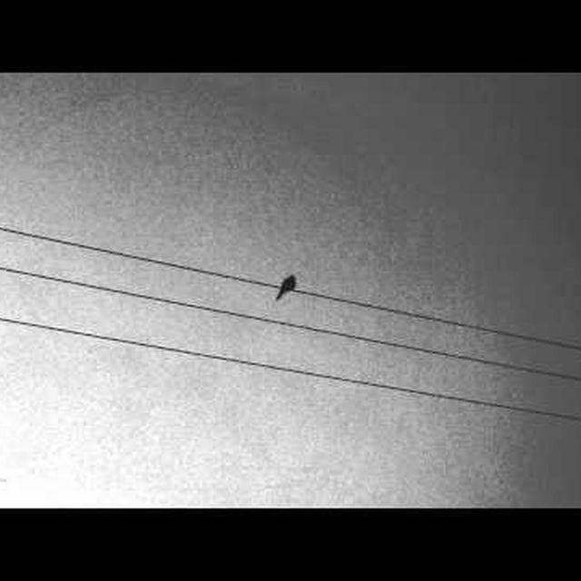 video: Apparat - Ash/Black Veil by lidia_anton