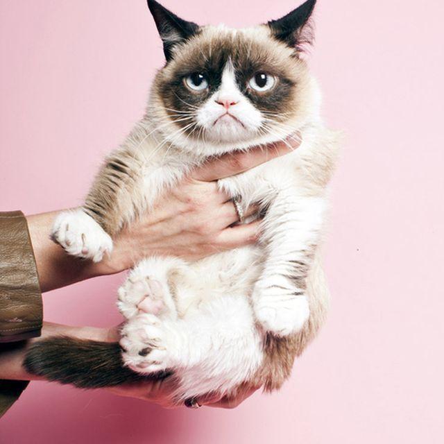 image: Grumpy Cat by arroyo