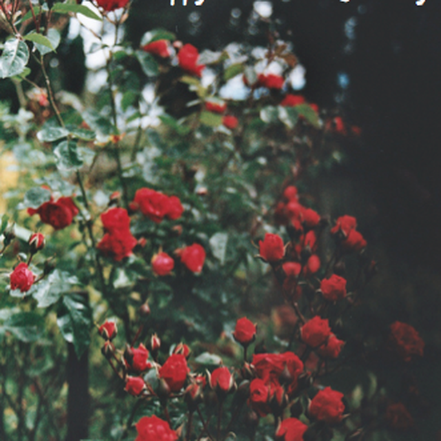 image: Flowers in RED by muymia